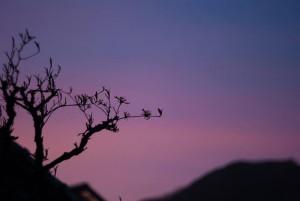 No.010 「春の夕暮れ」