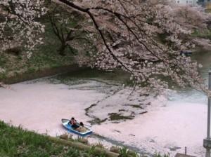 No.042 「不忍池の花筏」