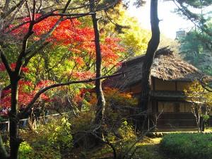 No.049 「三溪園の紅葉と庵」