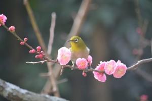No.059 「春②」