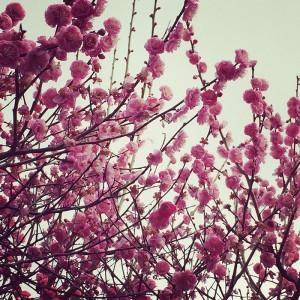 No.141 「春」