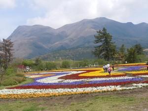 No.145 「阿蘇の花畑」