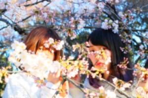 No.186 「桜」