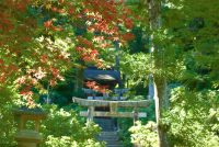 no98 宮島の秋始まる。
