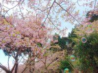 NO.042「春うらら」