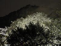 NO.047「桜・静寂の中」