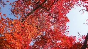 No.031 「autumn グラデーション」