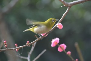 No.058 「春①」