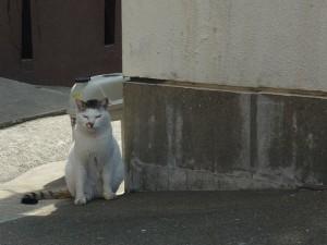 No.068 「港の猫」