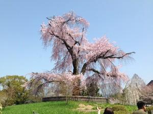 No.094 「大きな春」