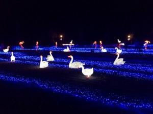 No.150 「白鳥の湖」