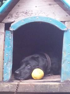 No.173 「我が愛犬」