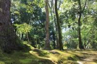 No.33 森林浴