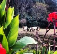 No55 緑と花とラバの家族