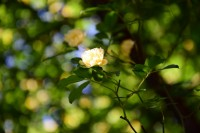 No99 かわいい花