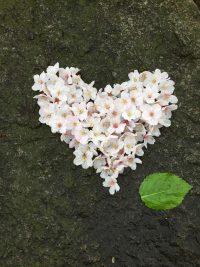 no67 千鳥ヶ淵の愛の桜