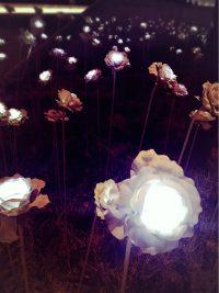 NO.032「夜に咲く花」