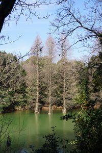 NO.037「水辺の木」