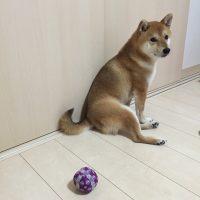 NO.060「飽きた犬」