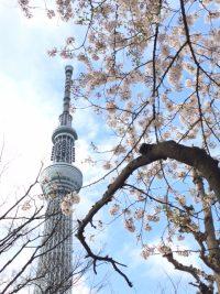 NO.070「桜」