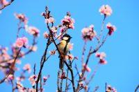 NO.096「春がきた」