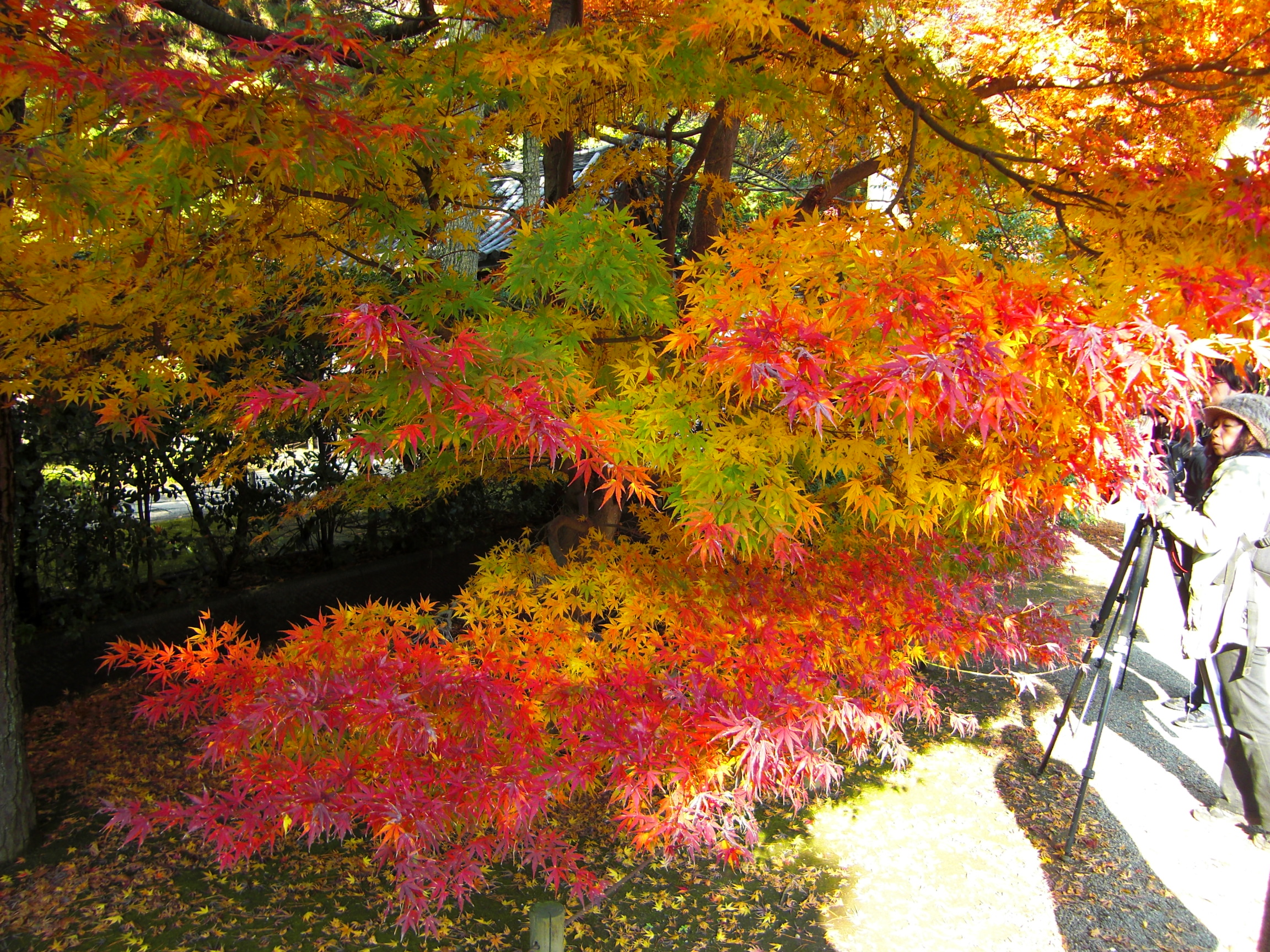 NO.073「五色紅葉を撮る」