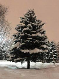 No.068 自然がくれたクリスマスツリー