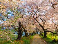 No.034 桜の季節