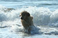 No.101 石狩浜の波と遊ぶ