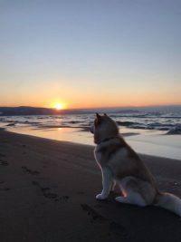 No.104 夕陽を眺めるマヤ