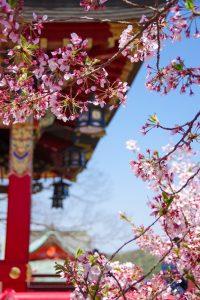 No.045 桜の額縁