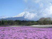 No.052 本栖湖芝桜と富士山