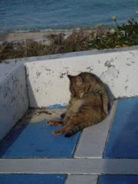 No.023 疲れた猫