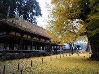 No.095 熊野神社大銀杏と長床