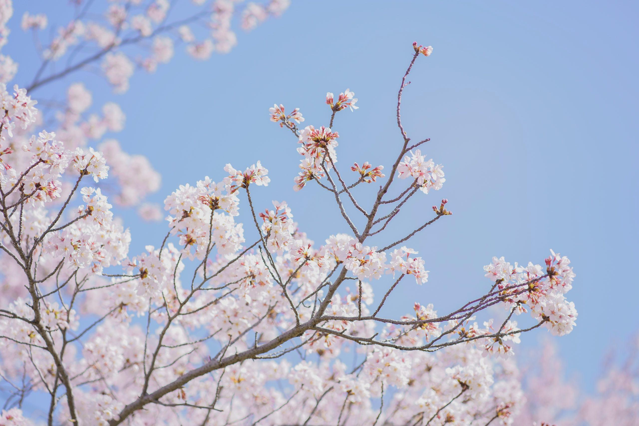No.016 春色の空