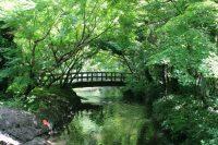 No.028 森と橋
