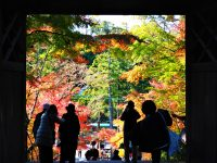 No.133 円覚寺山門の紅葉