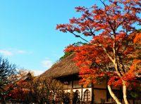 No.132 一条恵観山荘の紅葉