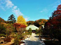 No.115 浄明寺の銀杏と紅葉