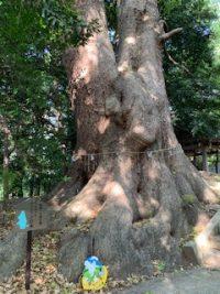 No.085 ムーミンの木